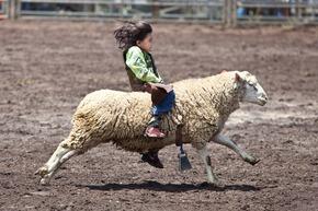 171361_web_sheep-kid