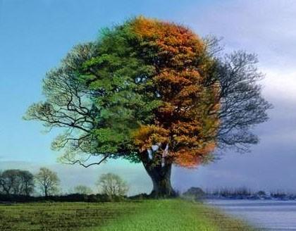 4-season-tree